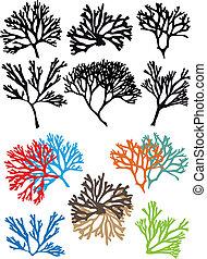 korale, wektor, komplet, rafy