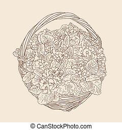 kosz, wiklina, kwiaty, wektor, rysunek