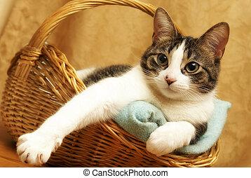 kosz, wygodny, kot