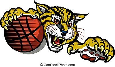 koszykówka, bobcat