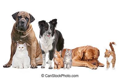 koty, grupa, psy