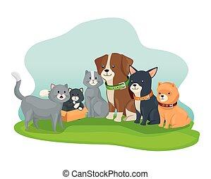 koty, psy, mały, grupa