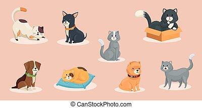 koty, psy, sprytny, grupa