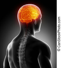 kręgosłup, mózg, jarzący się