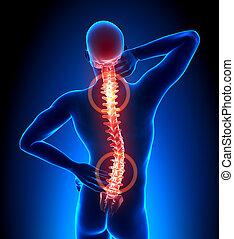 kręgosłup, uraz, -, kręgi, ból