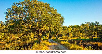 kraj, liniowany, dąb, droga, drzewa