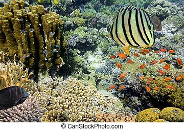 krajobraz., egipt, morze, czerwony koral