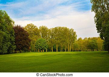 krajobraz., lato, drzewa, zielone pole, piękny