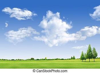 krajobraz, piękny, pole, forrest, lazur, zielone drzewo, trawa