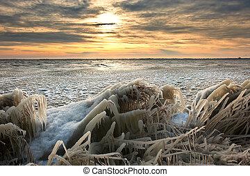 krajobraz, przeziębienie, lód, trzcina, wschód słońca, zima, pokryty