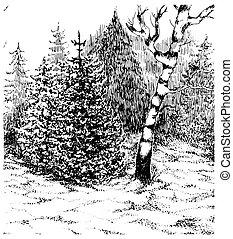 krajobraz., zima, darwn, ręka, forest., wektor, czarnoskóry, biały, illustration.