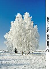 krajobraz, zima drzewa