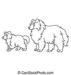 krajowy, psiarnia, odizolowany, sheepdog, clipart., pieszczoch, psi, monochromia, rysunek, fluffy., eps, szczeniak, purebred, genealogia, mascot., szorstki, lineart., ilustracja, 10., owczarek szkocki, sprytny, wektor, salon, pies