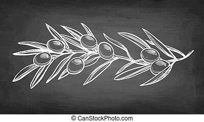 kreda, oliwka, rys, branch.