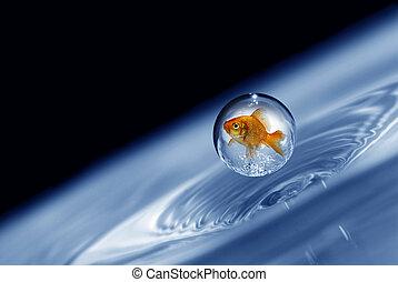 kropelka, złota rybka, pasiony