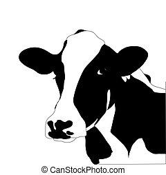 krowa, cielna, wektor, czarnoskóry, portret, biały
