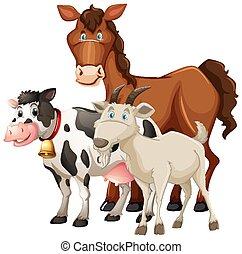 krowa, odizolowany, zwierzęta, białe tło, zagroda, sheep, koń, grupa