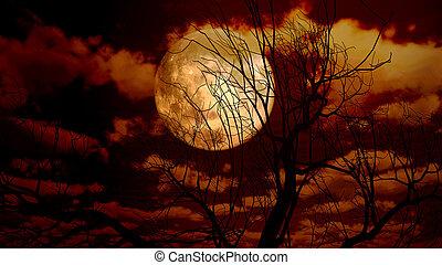 księżyc, drzewo, noc
