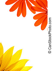 kwiat, kasownik, biały, details., czysty, ozdobny, strona