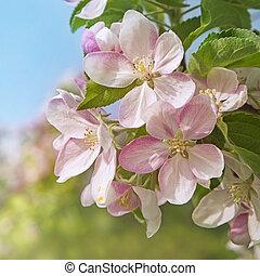 kwiat, kwiaty, brzoskwinia