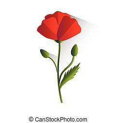 kwiat, mak, czerwony, odizolowany