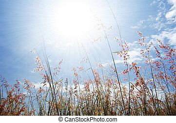 kwiat, niebo, trawa, dziki