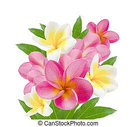 kwiat, piękny