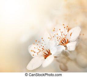 kwiat, skoczcie kwiecie, słoneczny dzień