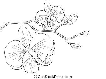 kwiat, storczyk
