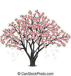 kwiat, wiśnia, na, drzewo, japończyk, biały