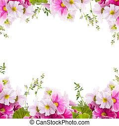 kwiatowy, wiosna, pierwiosnek, tło, bukiet