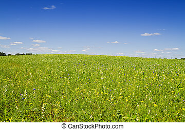 kwiaty, łąka