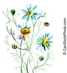 kwiaty, camomile
