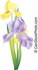 kwiaty, ilustracja, irys