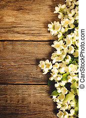 kwiaty, jaśmin