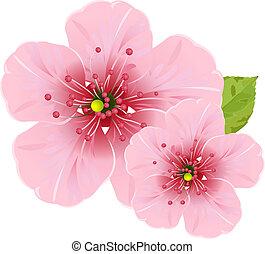 kwiaty, kwiat, wiśnia
