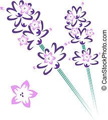 kwiaty, lawenda, pień, &
