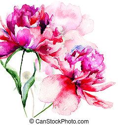 kwiaty, piwonia, piękny