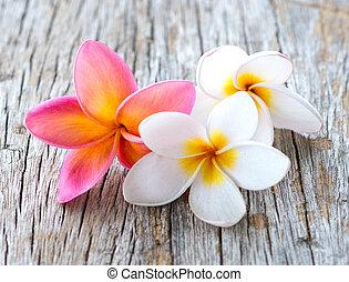 kwiaty, plumeria