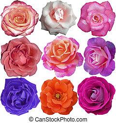 kwiaty, róża