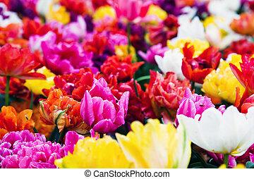 kwiaty, słoneczny dzień, barwny