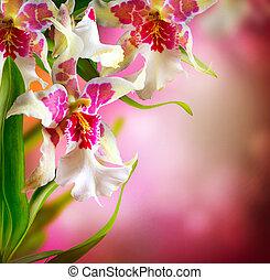 kwiaty, storczyk, projektować