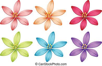 kwiaty, sześć