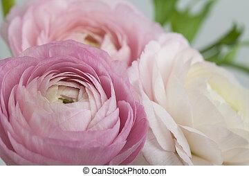 kwiaty, sztuka, ślub, święto, karta, design.