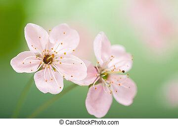 kwiaty, wiosna