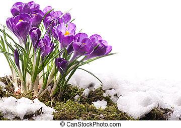 kwiaty, wiosna, sztuka, piękny