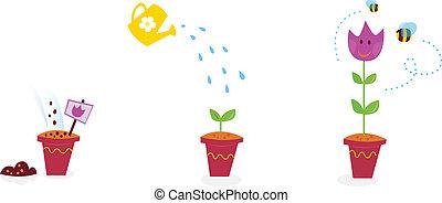 kwiaty, wzrost, gradacja, -, tulipan, ogród