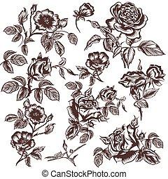 kwiaty, zbiór, wektor, ręka, pociągnięty, róża