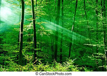 las, śni