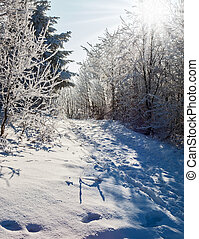 las, śnieg, boże narodzenie
